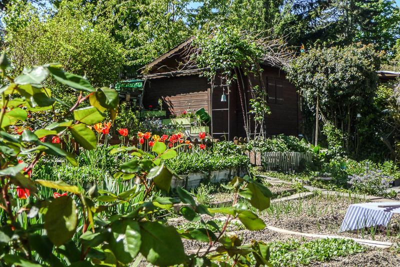 jardin potager fleuri les r ves d 39 eug nie. Black Bedroom Furniture Sets. Home Design Ideas